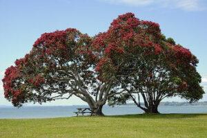 ポフツカワの木の画像